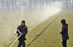 河南长葛农民在浇苗