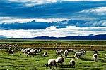 中国令人惊叹的六大草原