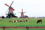 荷兰:返璞归真的田园牧歌